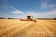 Объявление Услуги уборки урожая в Алтайском крае