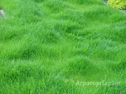 Объявление Травосмеси газонные и кормовые в Санкт-Петербурге и области