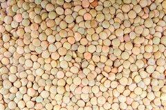 Объявление Горох продовольственный оптом от производителя. 25000 руб/тонна. в Тамбовской области
