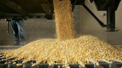 Объявление Услуги по помолу зерна в Калужской области