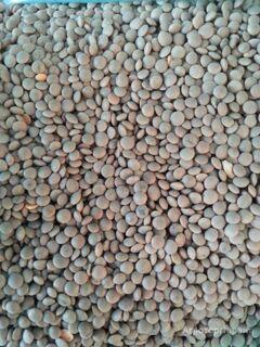 Объявление Семена чечевицы Донская краснозерная суперэлита в Ростовской области