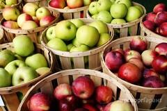 Объявление Продам яблоко разных сортов в Ростовской области