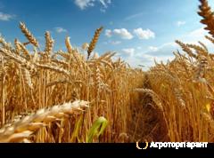 Объявление Куплю зерно пшеницы в Оренбургской области