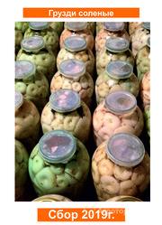 Объявление ПРОДАЮ ОПТОМ грузди боровые солёно-отварные (сухие и сырые) в Алтайском крае