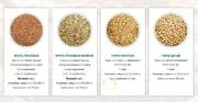 Объявление Крупа гречневая, перловка, ячка, горох от производителя в Алтайском крае