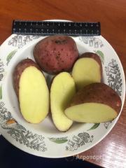 Объявление Картофель оптом 5+ от производителя  6р/кг. в Нижегородской области