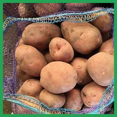 Объявление Картофель урожай 2020 года оптом. в Нижегородской области