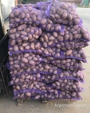Объявление Картофель оптом 5+ от производителя в Нижегородской области