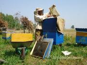 Объявление Продам мед алтайский оптом в Алтайском крае