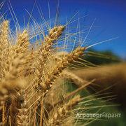 Объявление Семена ярового ячменя Леон, Ратник, Прерия, Вакула в Ростовской области