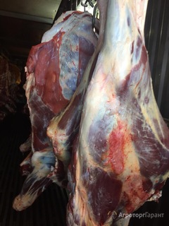 Объявление Мясо говядина в Тюменской области