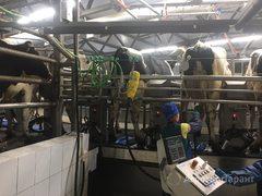 Объявление Система подготовки коровы к доению Puli-sistem. в Нижегородской области