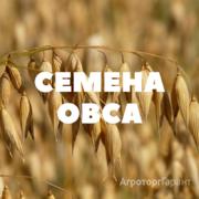 Объявление Семена ярового овса на посев в Краснодарском крае