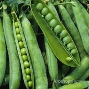 Объявление Семена гороха Ла Манш, Сантана в Краснодарском крае