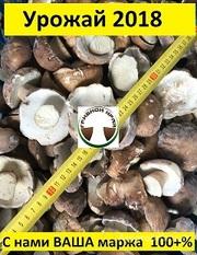 Объявление ПРОДАЮ ОПТОМ Белые замороженные грибы в Москве и Московской области