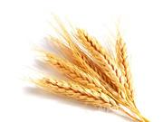 Объявление Покупаем пшеницу на элеваторах Краснодарского края в Краснодарском крае