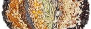 Объявление Семена зерновых и зернобобовых культур в Москве и Московской области