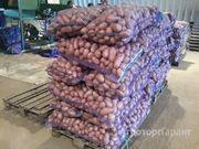 Объявление Овощи кортофель, морковь, свекла, капуста, лук в Алтайском крае