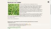 Объявление Продаю семена рапса в Алтайском крае