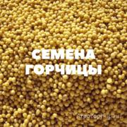 Объявление Семена горчицы на посев в Краснодарском крае