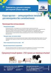 Объявление ЗЦМ для поросят «Каша крутая» в Алтайском крае
