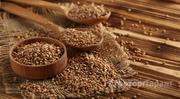 Объявление Продаем гречиху (зерна) в Ивановской области