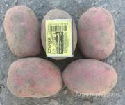 Объявление Картофель продовольственный, семенной от производителя в Рязанской области