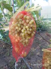 Продаю Защитная сетка для гроздей винограда в Краснодарском крае