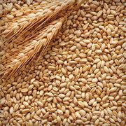 Объявление Пшеница Фураж в Республике Крым