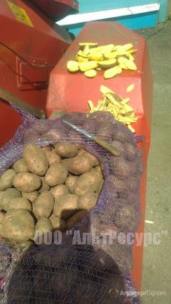 Объявление Картофель оптом от производителя, Калибр 5+ в Тамбовской области