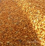 Объявление Просо желтое на экспорт в Краснодарском крае