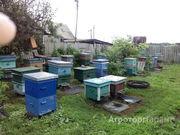 Объявление Продам мед правильный в Москве и Московской области