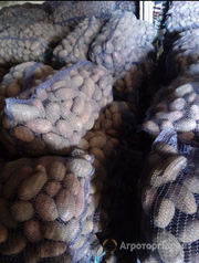 Объявление Картофель в Крыму калиброванный от производителя оптом в Республике Крым