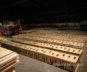 Объявление Продам пчелопакеты в Алтайском крае