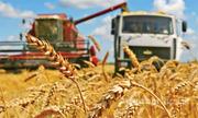 Объявление Услуги по уборке урожая в Алтайском крае