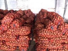 Объявление Картофель оптом Гала калибр 55+ напрямую от производителя в Красноярском крае