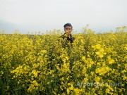 Объявление Семена рапса Rapool в Алтайском крае