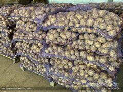 Объявление Картофель оптом. Продают Фермеры. в Москве и Московской области