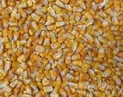 Объявление Кукуруза в Краснодарском крае