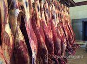 Объявление Продаем: говядину оптом в Москве и Московской области