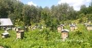 Объявление Таежный мед в Алтайском крае