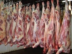 Объявление мясо говядина в Самарской области