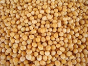 Объявление Семена гороха импортного в Ростовской области
