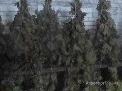 Объявление Кормовые веники для коз и кроликов в Ярославской области