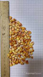 Объявление кукуруза краснодарская в Алтайском крае
