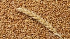 Объявление Закупаем ячмень, пшеницу в Курской области