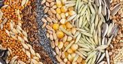 Объявление Куплю пшеницу, семена, шрот в Республике Башкортостан