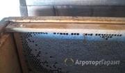 Объявление Продам мед сотовый в полурамках  1000 кг в Алтайском крае