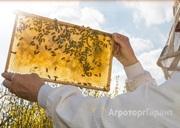 Объявление Продаю таежный мед урожая 2015 года  в Алтайском крае