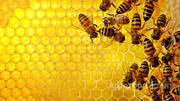 Объявление Мёд, медовая продукция в Алтайском крае